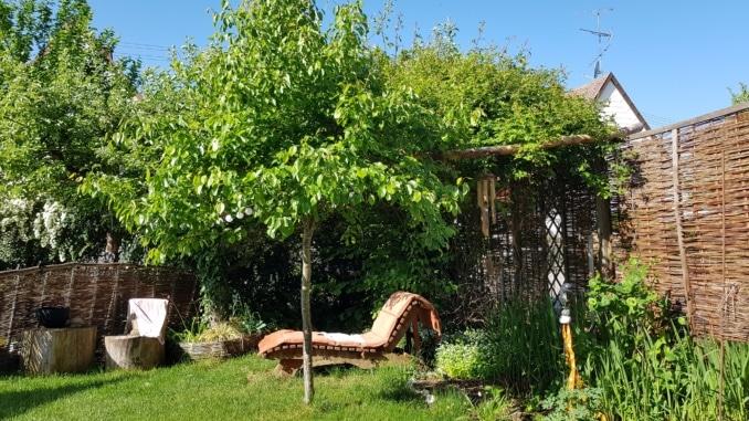 Garten, Pergola, Liege, Baum, Gartenzeitung.com