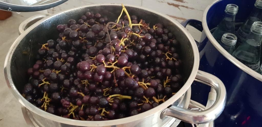 Dampfentsafter, entsaften, Saft machen, Weintrauben, Traubensaft, Gartenzeitung.com
