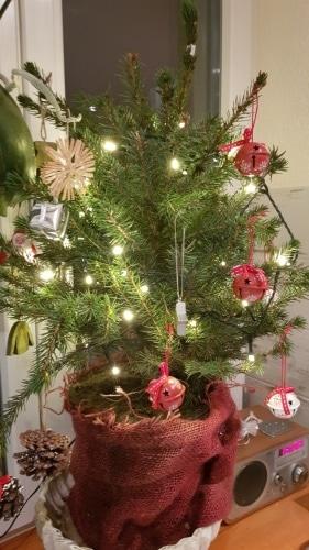 Weihnachtsbaum, Christbaum, Trieb, Tannenbaum, Topf, Gartenzeitung.com
