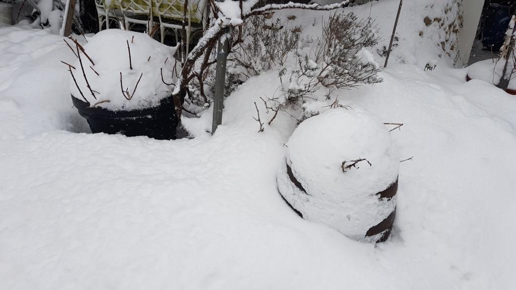 Schnee, Winterschutz, Frost, Winter, Gartenzeitung.com