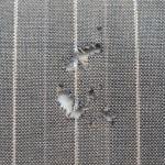 Motten, Kleidermotten