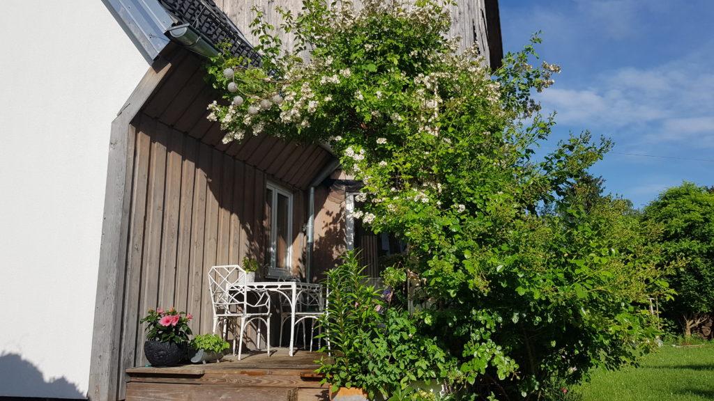 Terrasse, Veranda, wild, überdacht, Rose, Wildrose