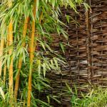 Bambus / Pixabay