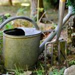 Garten, Bild von congerdesign auf Pixabay