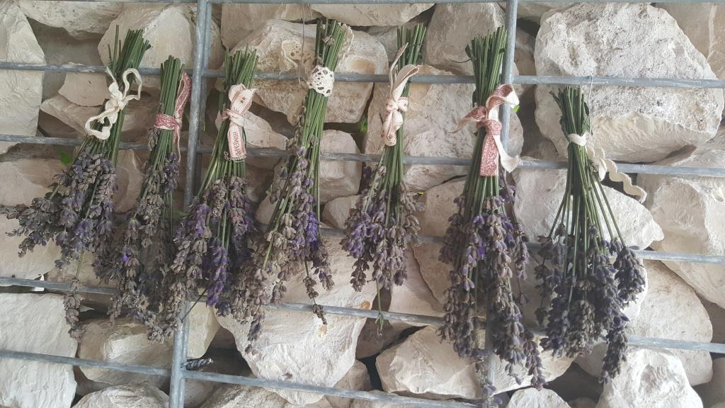 Lavendel, Lavendula, Gartenzeitung.com